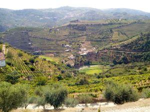Vignoble vertical pour le vin de Porto