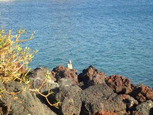Statue qui change avec la marée