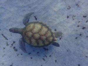 morro tortue2