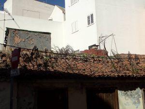 tener cactus toit2