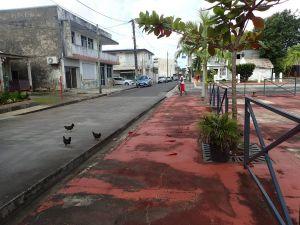 guada M a l'eau city.poulesJPG