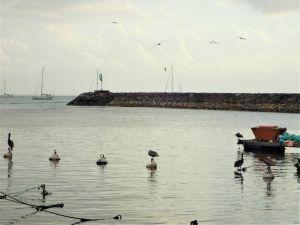 guada port Lo pélican cit2y