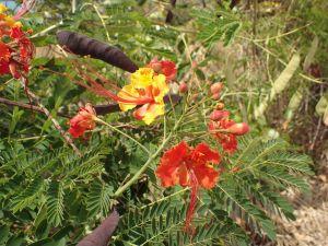 pttmar fleurs