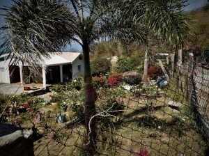 La maison aux fleurs cultivées
